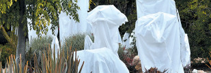 Frost Protection with AME Landscape Companies
